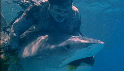 I am not joking, there's a literal zombie vs shark wrestling match underwater. Look at it.